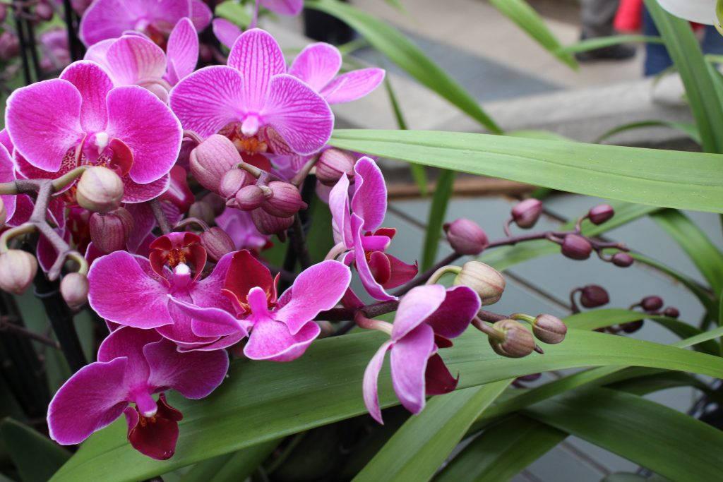 Орхидеи обои на рабочий стол