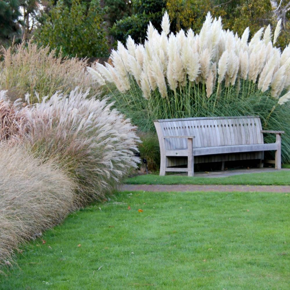 Осока в дизайне сада возле скамьи