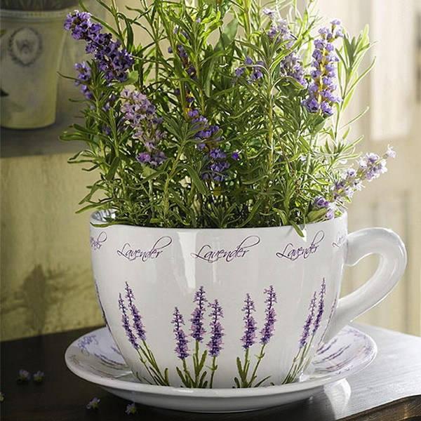 цветущий розмарин в чашке
