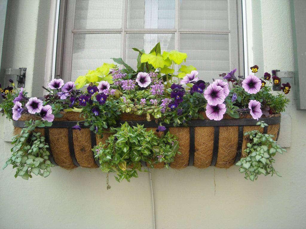 На что нужно обращать внимание, чтобы комнатные растения хорошо развивались в «цветочном окне»