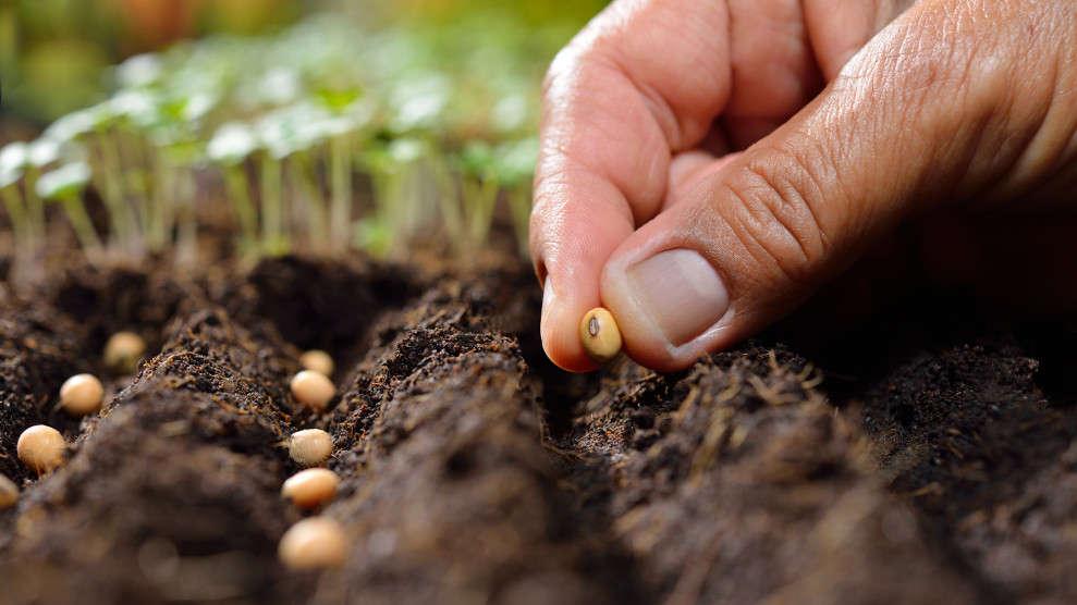 Сроки хранения семян цветов