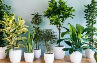 комнатные растения в жару