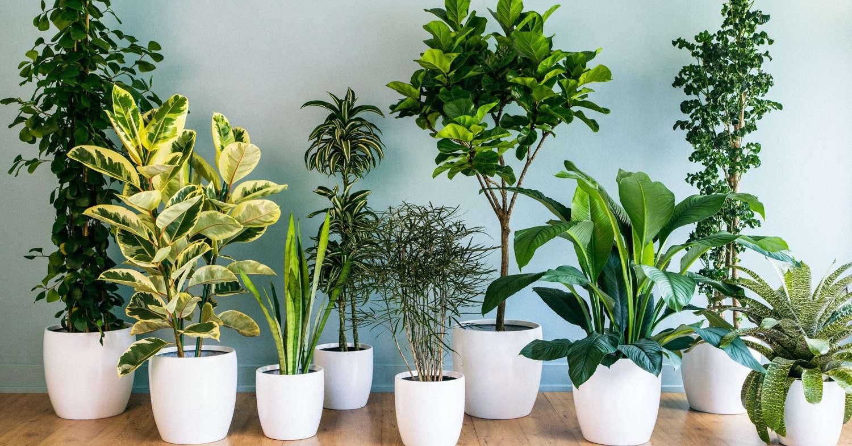 Температурный режим для комнатных растений