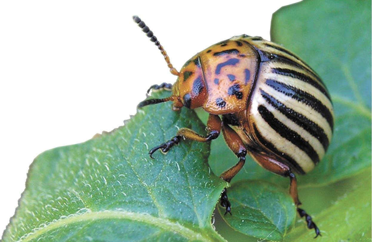 инсектициды растений