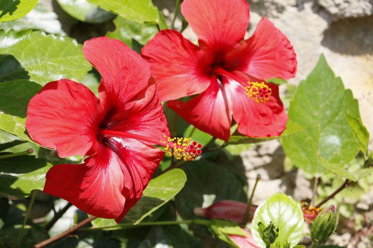 китайский цветы названия фотографии если
