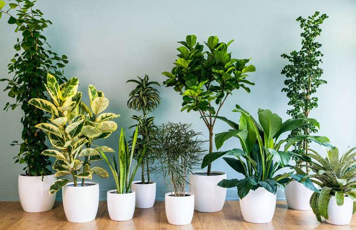 Особенности микроклимата для выращивания цветов