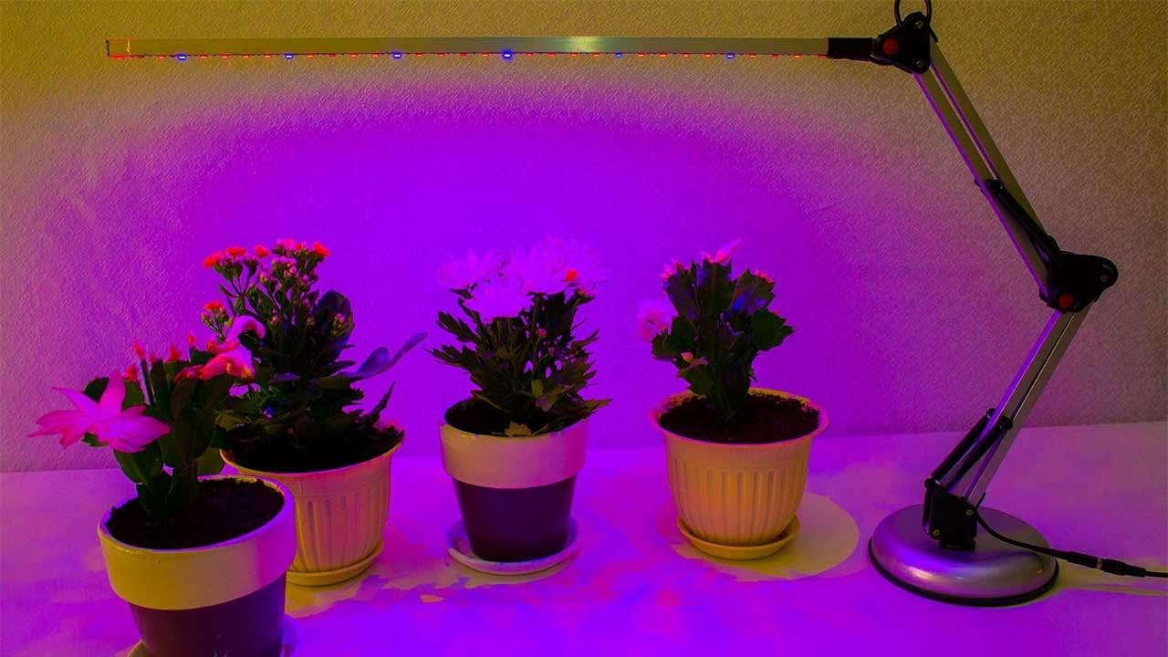 Освещение для выращивания растений