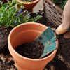 Пересадка растения дома