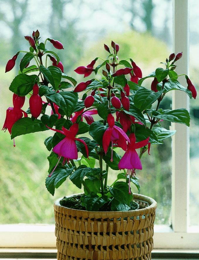 Редкие и красивые комнатные цветы