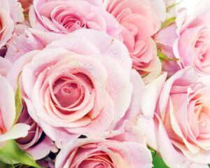 Как определить свежесть цветка