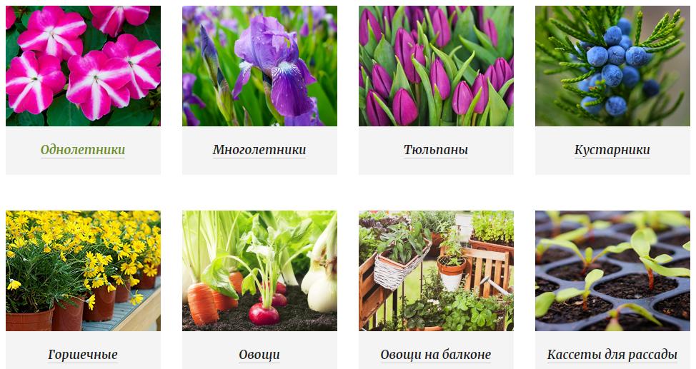 Ассортимент растений и цветов