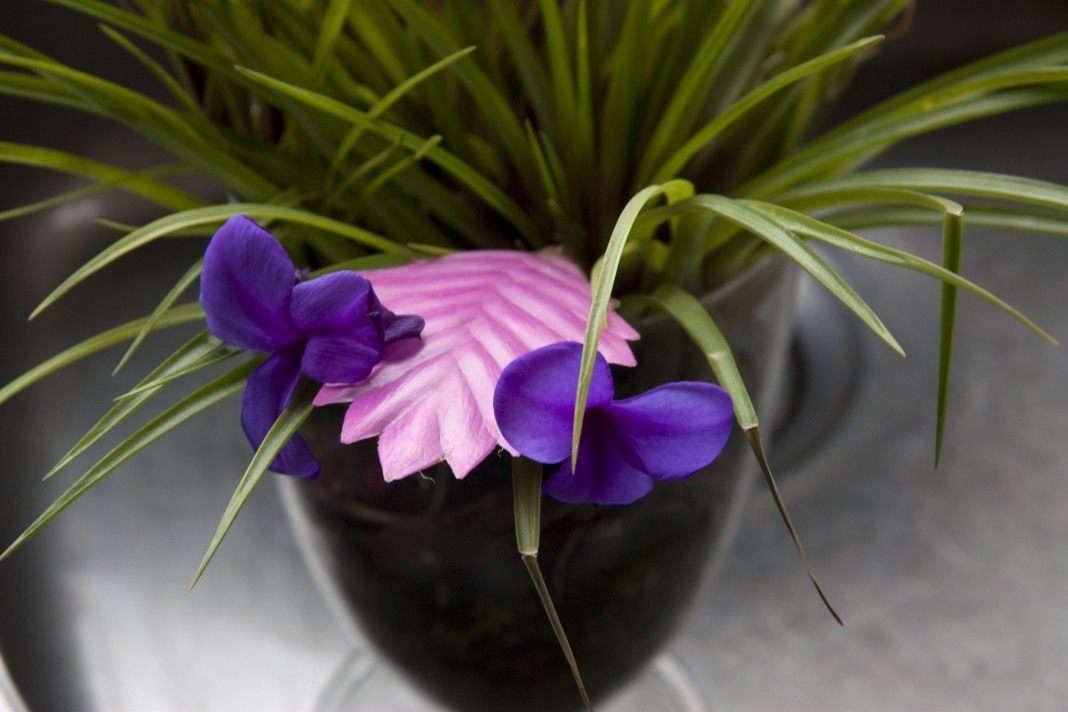 Цветок Таллисандии
