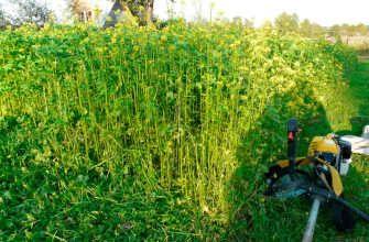 Сидераты для выращивания растений