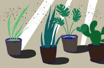 мошки в растениях