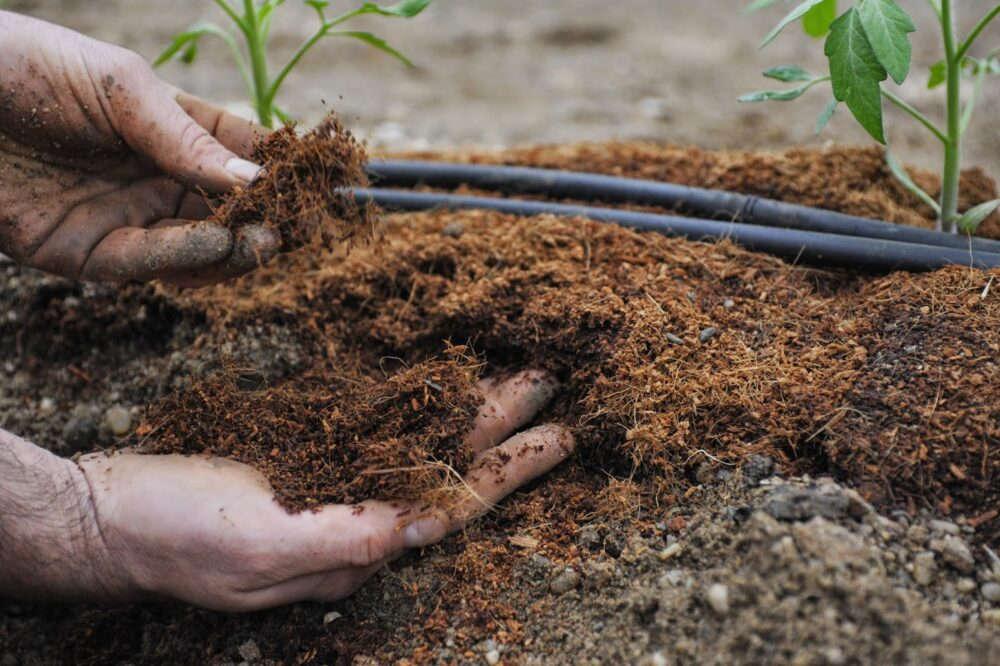 органические натуральные удобрения