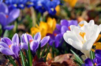 Какие цветы высадить весной на клумбе