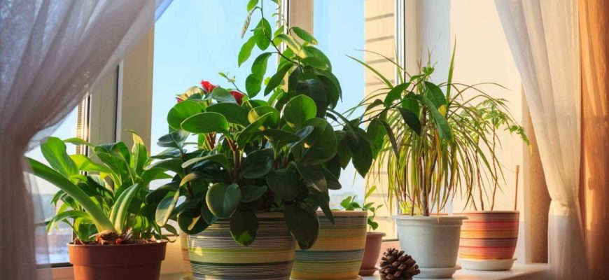 Комнатные растения в горшках