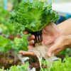 Оборудование для выращивания садовых цветов и растений