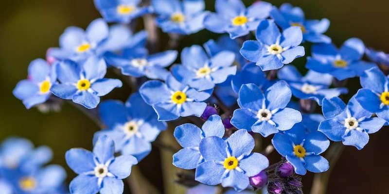 Садовая синяя корзинка